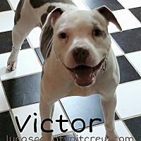 Adopt A Pet :: Victor - Toledo, OH