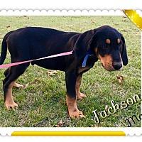 Adopt A Pet :: Jackson meet me 11/18 - Manchester, CT