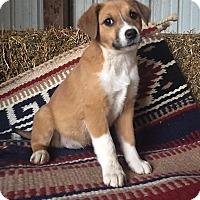 Adopt A Pet :: Chloe - Russellville, KY