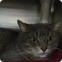 Adopt A Pet :: Sally - Wyandotte, MI