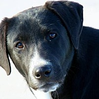 Adopt A Pet :: Abby - Clifton, TX
