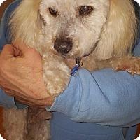 Adopt A Pet :: Milton - Sheridan, OR