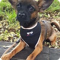 Adopt A Pet :: Cash - Potomac, MD