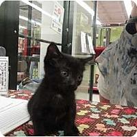 Adopt A Pet :: Keith - Phoenix, AZ