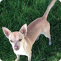 Adopt A Pet :: PATTON - Phoenix, AZ