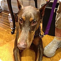 Adopt A Pet :: Reba--pending - New Richmond, OH