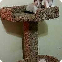 Adopt A Pet :: Mac -Rosebud's baby - McDonough, GA