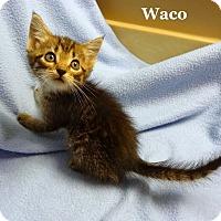 Adopt A Pet :: Waco - Bentonville, AR