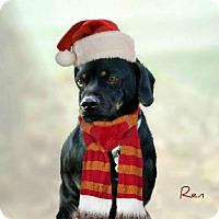 Adopt A Pet :: REN - Upper Sandusky, OH