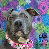 Adopt A Pet :: Lucy - Tampa, FL