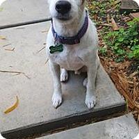 Adopt A Pet :: Zach - Miami, FL
