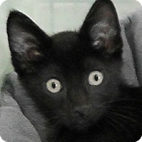 Adopt A Pet :: Ebony - Redondo Beach, CA