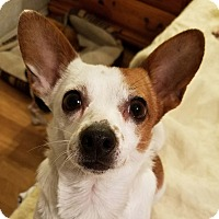 Adopt A Pet :: Roxie - Durham, NC