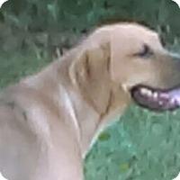 Adopt A Pet :: Hoss - Manchester, CT