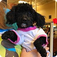 Adopt A Pet :: Emily - Atlanta, GA