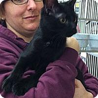 Adopt A Pet :: Raven - Riverhead, NY