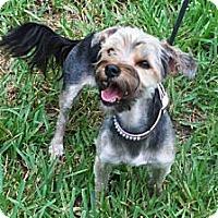 Adopt A Pet :: Coco - Minneola, FL
