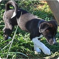 Adopt A Pet :: Ken - Douglasville, GA