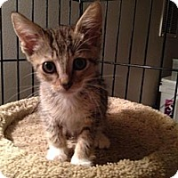 Adopt A Pet :: Tracy - East Hanover, NJ