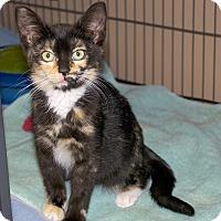 Adopt A Pet :: Sootyfoot - Sunderland, ON