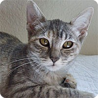 Adopt A Pet :: Misty - Pacific Grove, CA