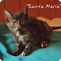 Adopt A Pet :: Santa Maria - Ocean City, NJ