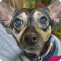 Adopt A Pet :: Dancer - Meridian, ID