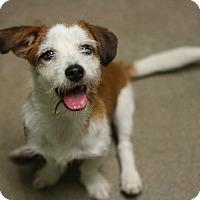 Adopt A Pet :: Frazier - Canoga Park, CA