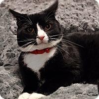 Adopt A Pet :: Fielding - Wayne, NJ