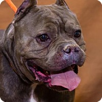 Adopt A Pet :: Gunter 34614468 - Chesapeake, VA