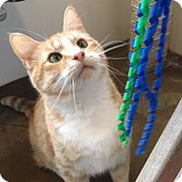 Adopt A Pet :: Mercutio - Green Bay, WI
