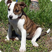 Adopt A Pet :: Delilah(10 lb) BIG Personality - Sussex, NJ