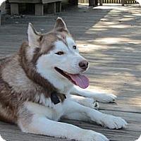 Adopt A Pet :: Timber - Belleville, MI