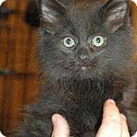Adopt A Pet :: Emerill - Grand Rapids, MI