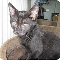 Adopt A Pet :: Blackie - Catasauqua, PA