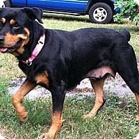 Adopt A Pet :: Lola - Seffner, FL