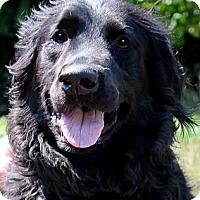 Adopt A Pet :: LINUS(HE DESERVED BETTER!!! - Wakefield, RI