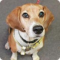 Adopt A Pet :: Chester Boy - Phoenix, AZ
