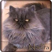 Adopt A Pet :: Nadira - Beverly Hills, CA