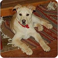 Adopt A Pet :: Kai - Chula Vista, CA