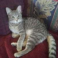 Adopt A Pet :: DAN (aka Dancer) - Fort Pierce, FL