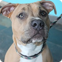 Adopt A Pet :: Fiona - Chicago, IL