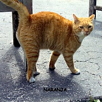 Adopt A Pet :: Naranja - Naples, FL
