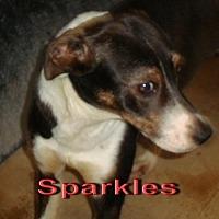 Adopt A Pet :: Sparkles - Coleman, TX