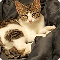 Adopt A Pet :: Paulie - Hazlet, NJ