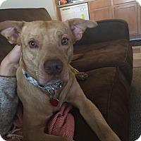 Adopt A Pet :: Sebastian - Allentown, NJ