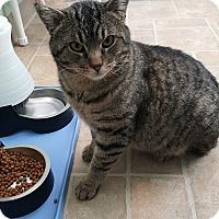 Adopt A Pet :: Killian - Cody, WY