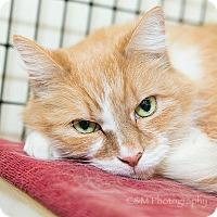 Adopt A Pet :: Nunu - Burlingame, CA