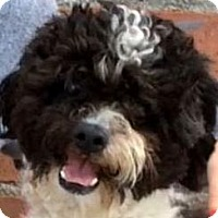 Adopt A Pet :: STITCH (video) - Los Angeles, CA