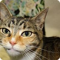 Adopt A Pet :: Ally (PB) - Exton, PA